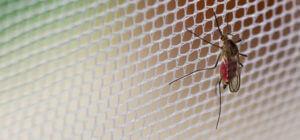 prezzi zanzariere Monza e Brianza